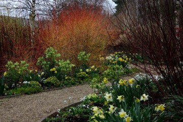 winter-garden-feb-29-low-img_16661