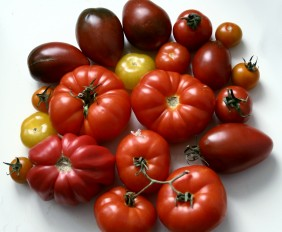 homegrown heritage tomatoes