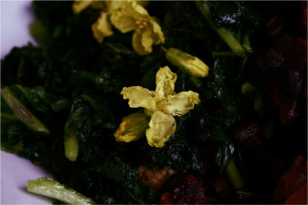 edible kale flowers