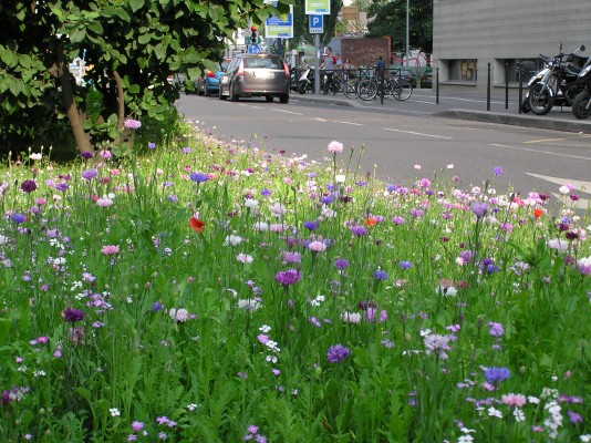 Meadow up your street project at the Chelsea Fringe