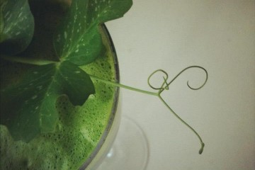 peashoot cocktail