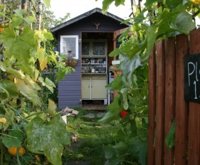 Katie's allotment