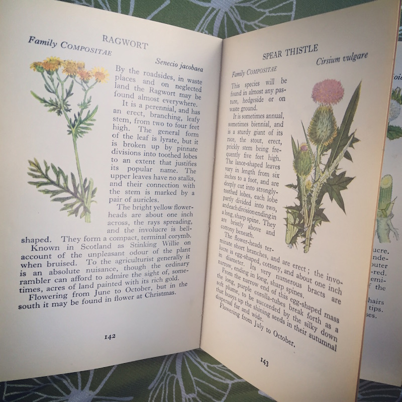old wildflower book