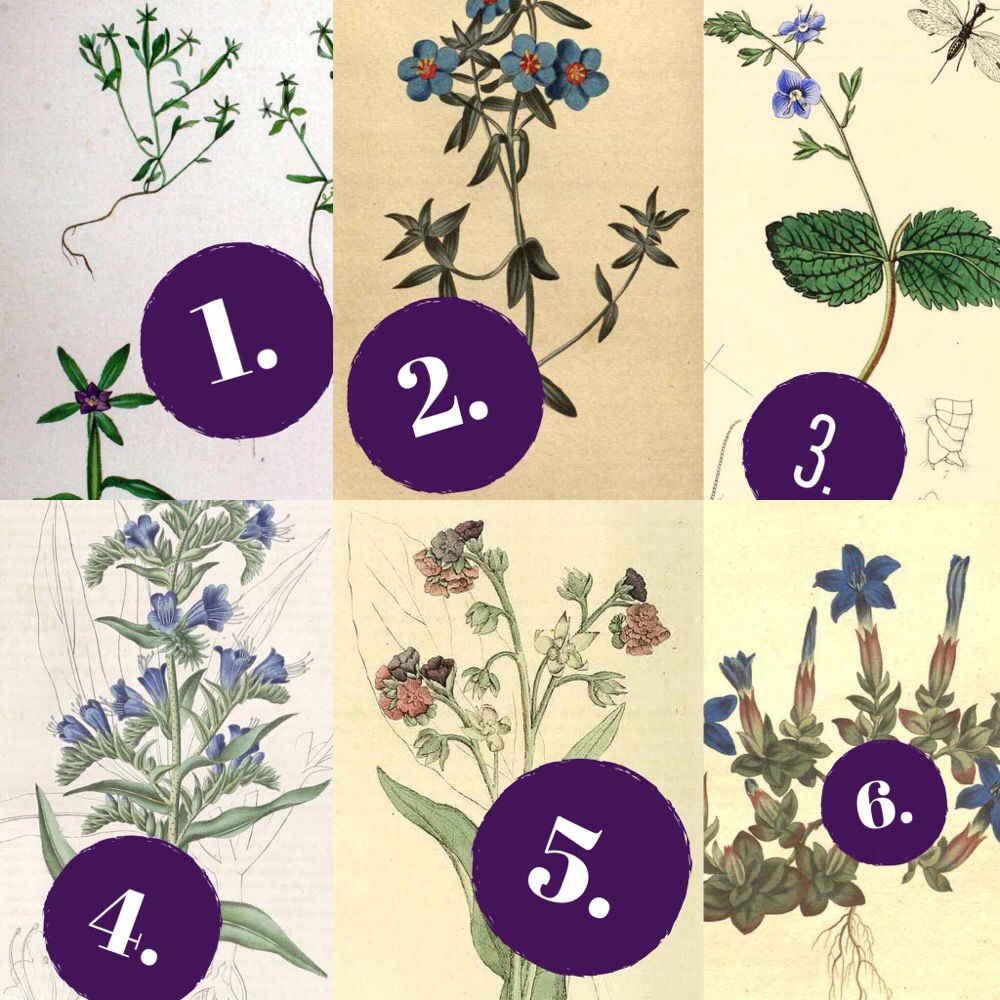 botanical quiz